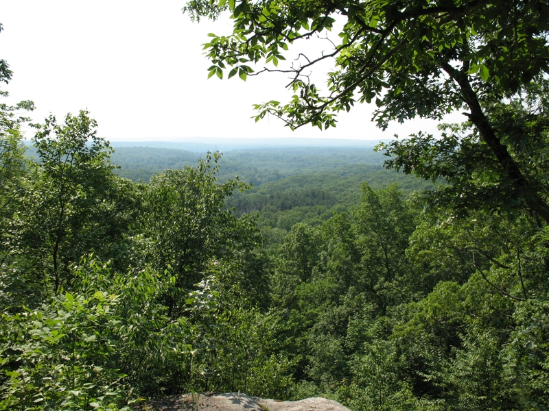 View of forest from cliff