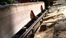 wood in the sawmill in UConn Forest