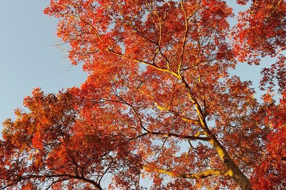 tree in fall